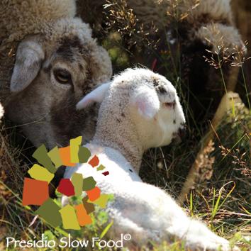 cibo-agnello