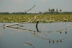 avifauma presente nell'oasi naturalistica di Campotto