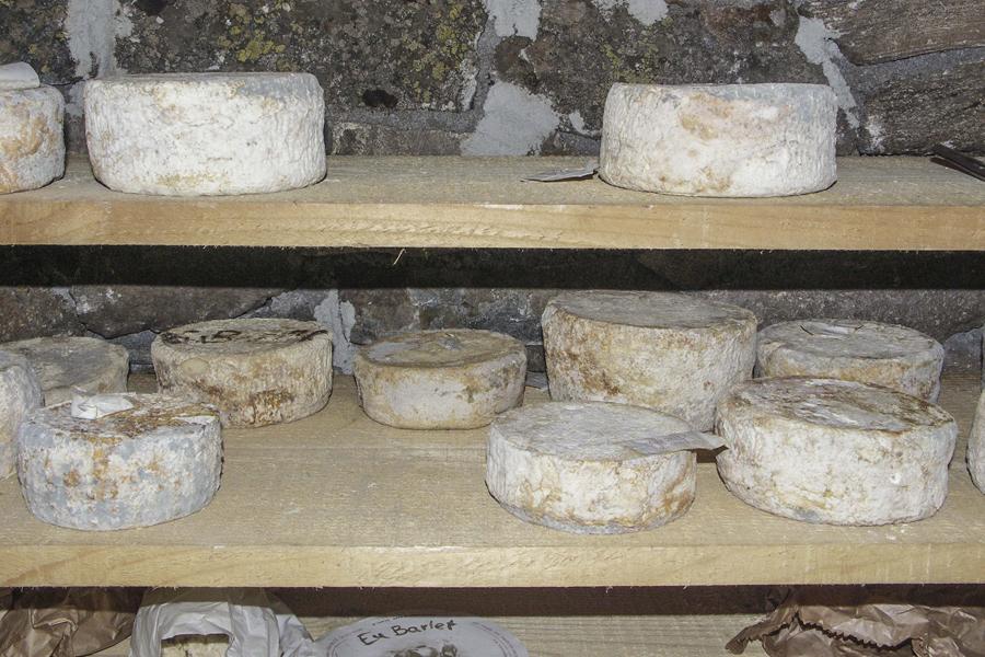 formaggi di pecora dell'alpeggio della Vagliotta