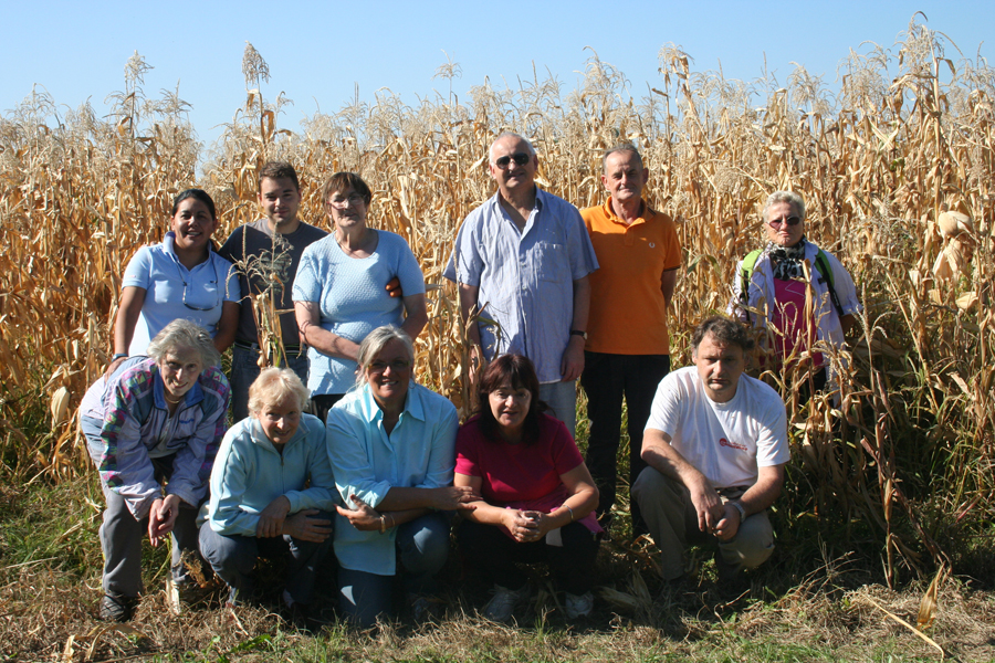 gruppo di volontari durante la raccolta del cinquantino