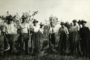mietitori in Brianza negli anni 30 del Novecento