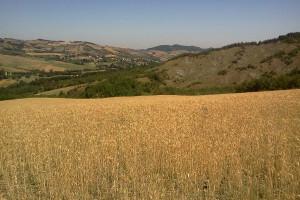 paesaggio agrario a Bazzano